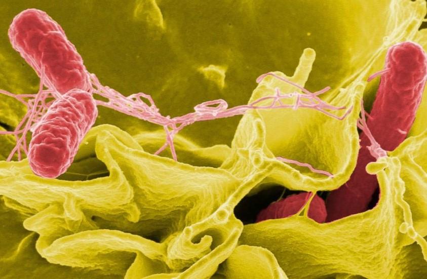 Groźna bakteriach w żłobkach w Zabrzu